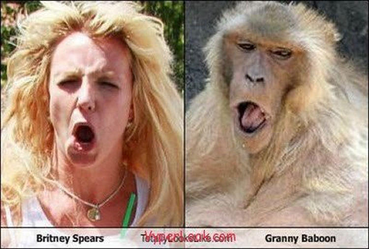 20 Celebrity Historical Doppelgangers - Britney Spears and Granny Baboon.