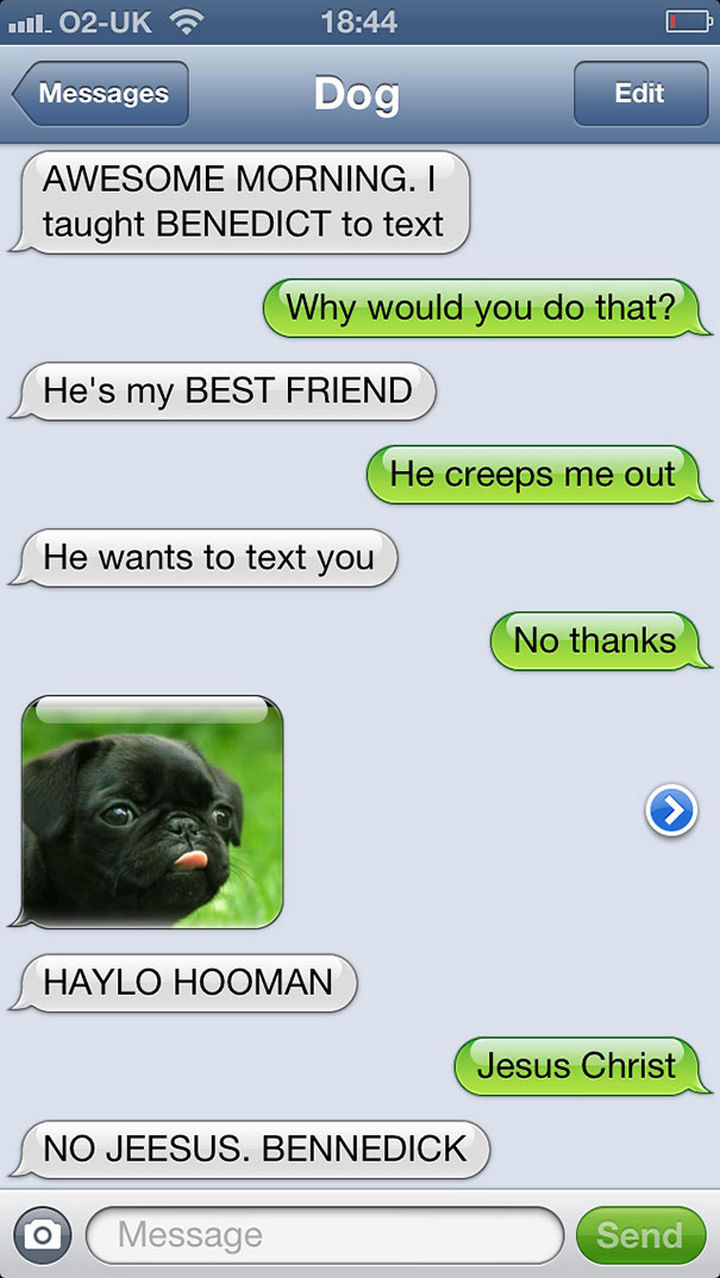 22 Hilarious Text Messages If Dogs Could Text - Haylo Hooman.