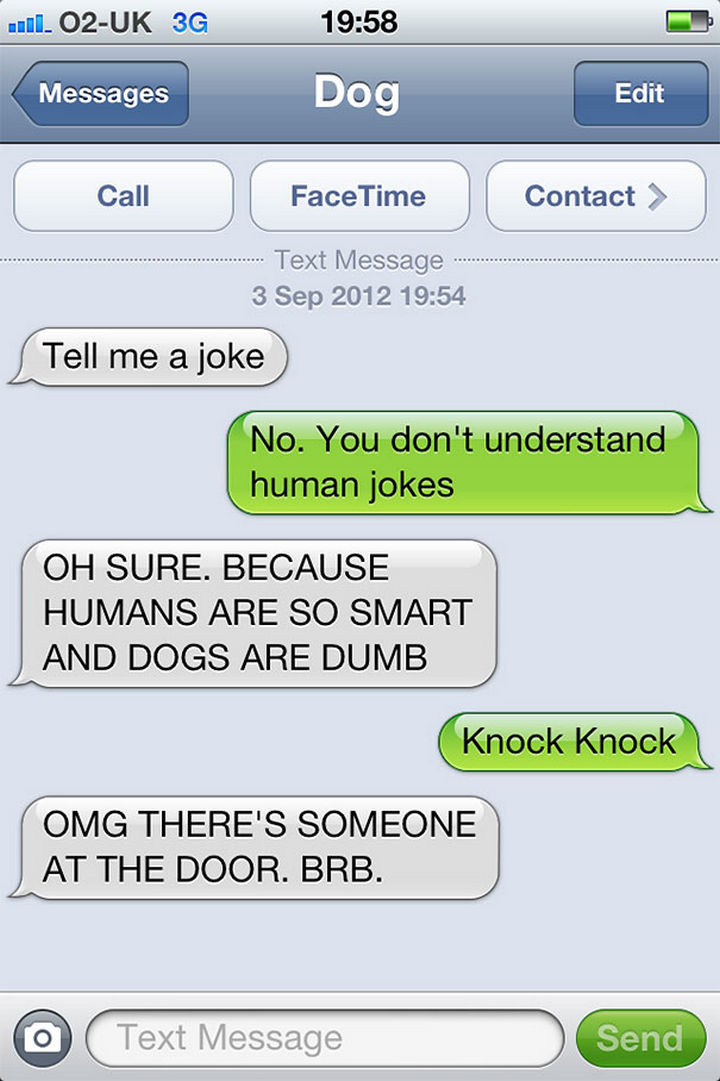 22 Hilarious Text Messages If Dogs Could Text - Not a knock knock joke!