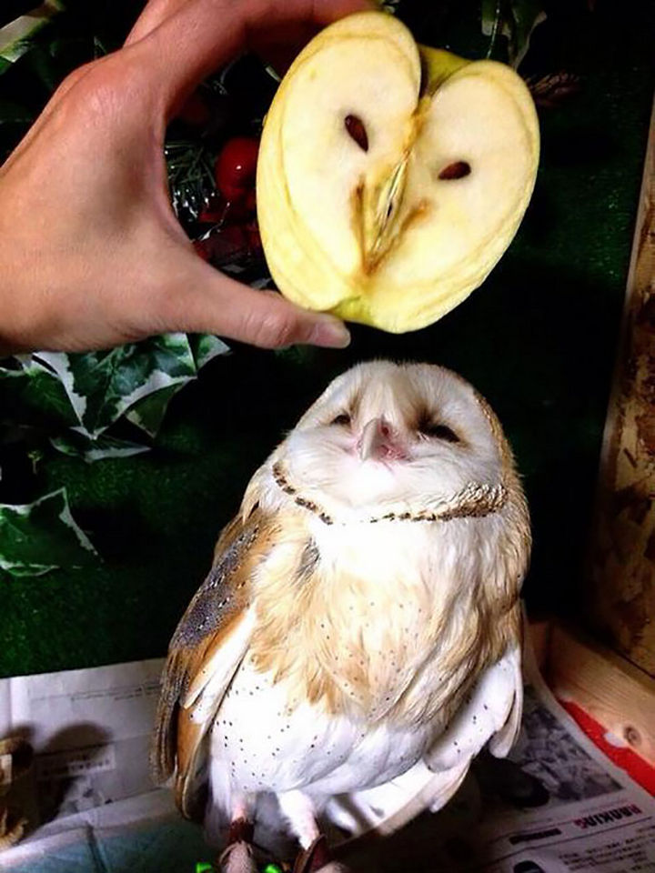 25 Things That Can't Be Unseen - A sliced apple looks like an owl.