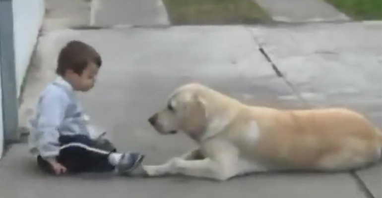 Caring Dog Befriends Shy 3-Year-Old Boy With Down-Syndrome.