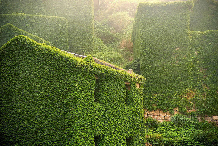 ...but beautiful green plants wrap themselves around every structure.