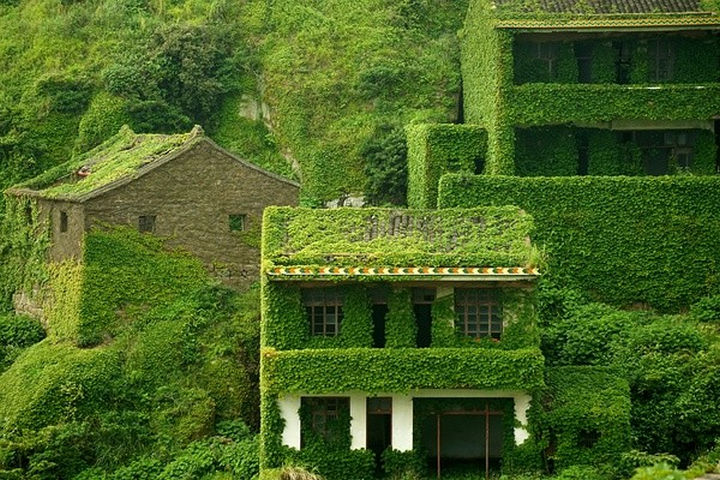 Moss is covering nearly every roof...
