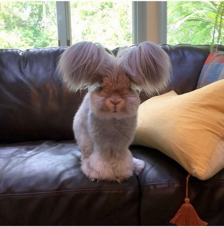 Wally lives in Massachusetts, USA and is famous for his adorable looks.