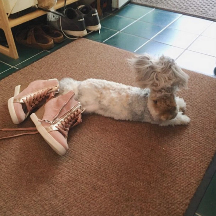 All that hopping sure would be easier with a new pair of sneakers. Wally is such a silly rabbit!
