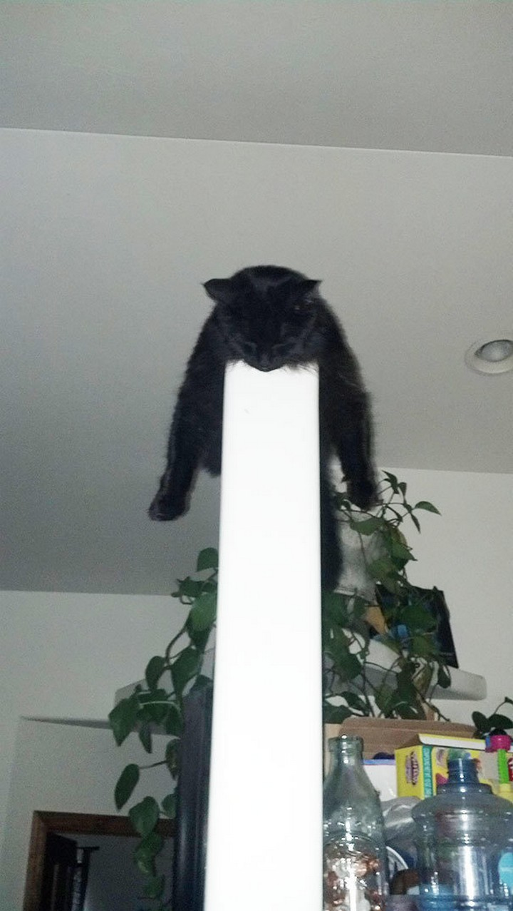24 MORE Cats Asleep in a State of Bliss - This cat likes to live on the edge, literally.