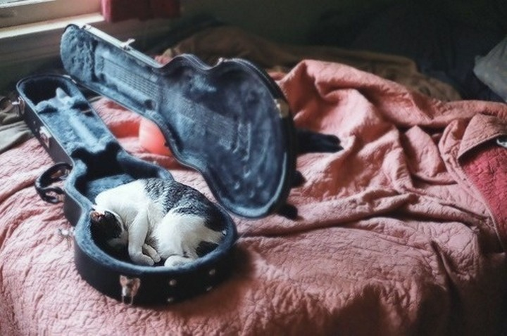 24 MORE Cats Asleep in a State of Bliss - This person just lost their guitar case.