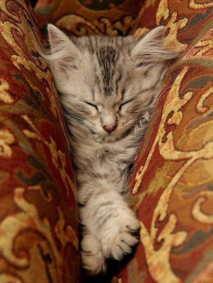 24 MORE Cats Asleep in a State of Bliss - Too comfy.
