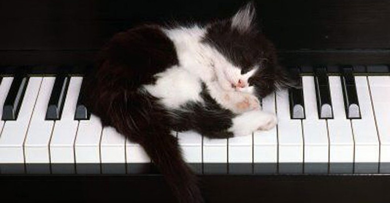24 MORE Cats Asleep in a State of Bliss in the Most Interesting Places