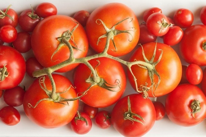 Keep your tomatoes out of the refrigerator.