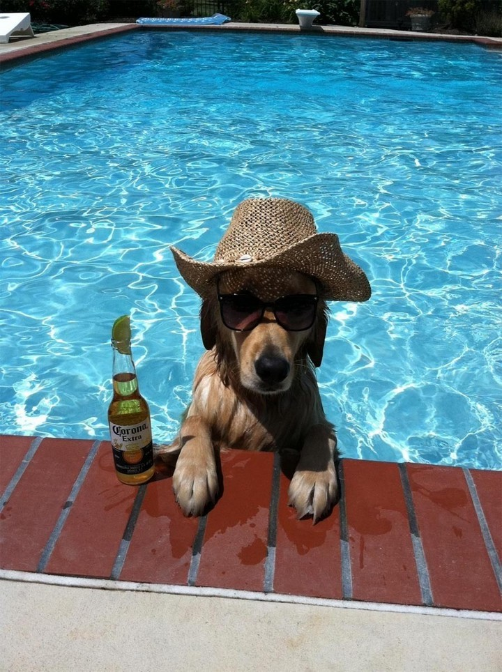 """39 Animals Swimming in Pools - """"Warm sun, cool water, and my favorite beer. Life is sweet!"""""""