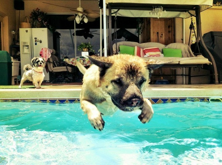"""39 Animals Swimming in Pools - """"Last one in is a rotten egg!"""""""
