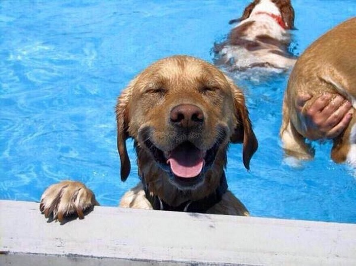 """39 Animals Swimming in Pools - """"Did someone say pool party? I'm so happy!"""""""