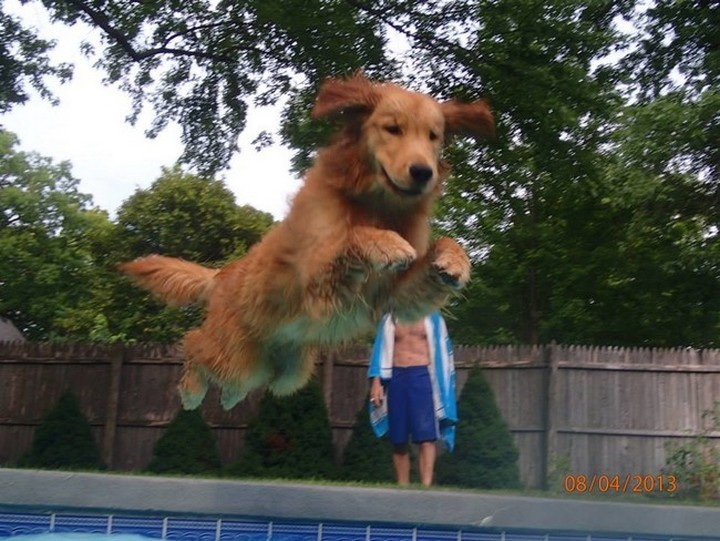 """39 Animals Swimming in Pools - """"Incoming!!"""""""