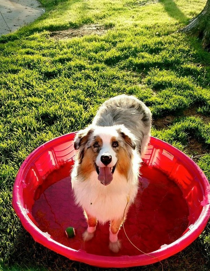 """39 Animals Swimming in Pools - """"How do you like my new pool?"""""""