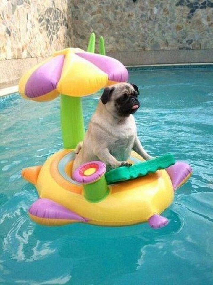 """39 Animals Swimming in Pools - """"I look so cute."""""""