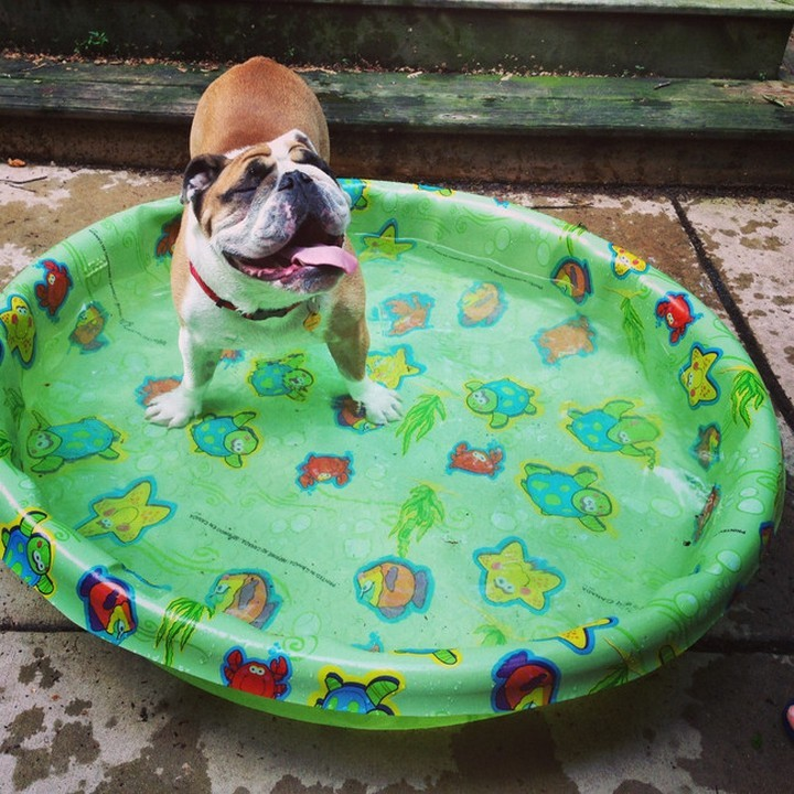 """39 Animals Swimming in Pools - """"This is MY pool and I love it, can you tell?"""""""