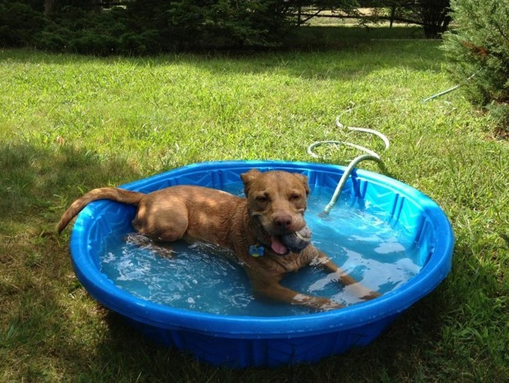 """39 Animals Swimming in Pools - """"This pool is great but this tennis ball is the icing on the cake."""""""