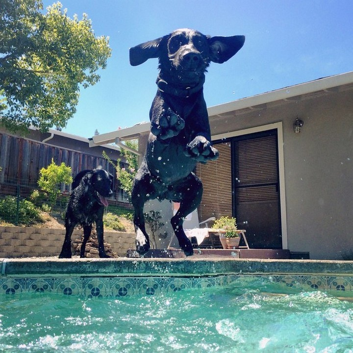 """39 Animals Swimming in Pools - """"There is a paw-ty going on and I'm crashing it!"""""""