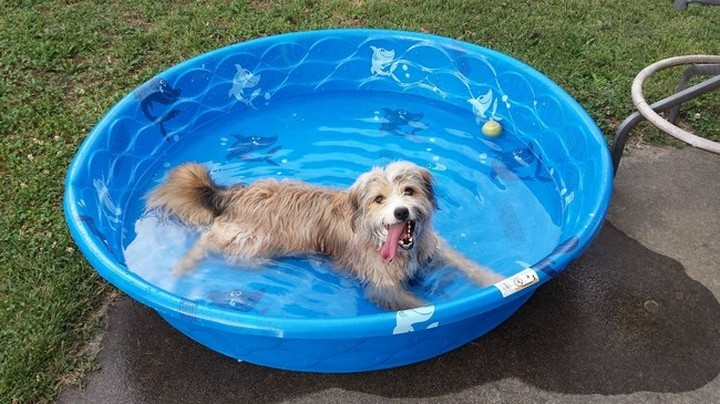 """39 Animals Swimming in Pools - """"It's blue and it's fantastic!"""""""