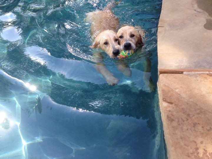 """39 Animals Swimming in Pools - """"Sharing is caring!"""""""
