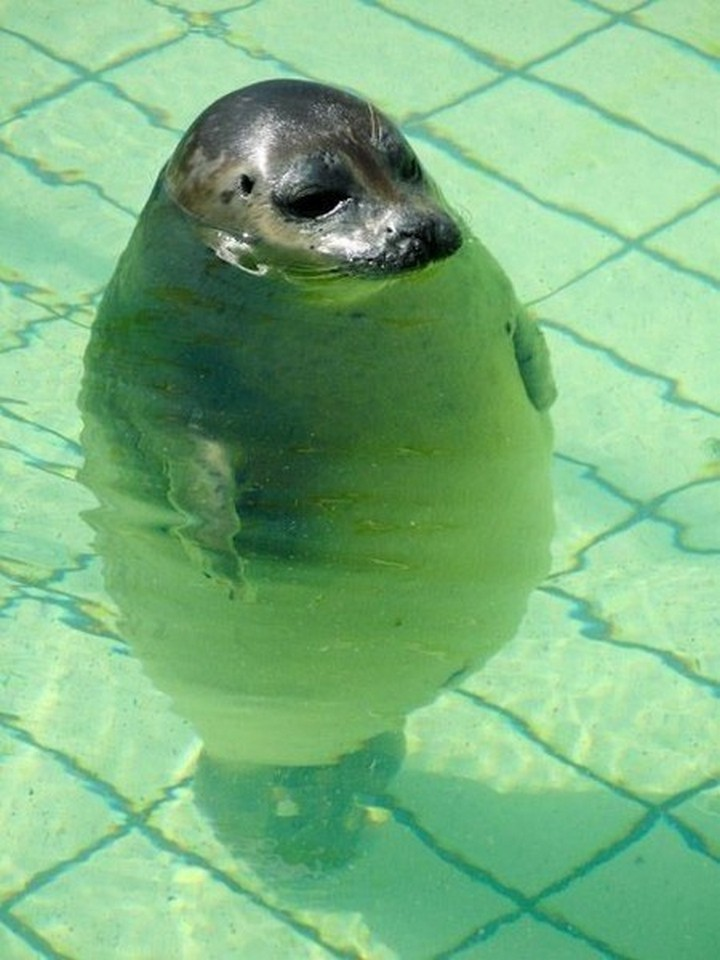 """39 Animals Swimming in Pools - """"Hey, is there a shallow end in this pool?"""""""