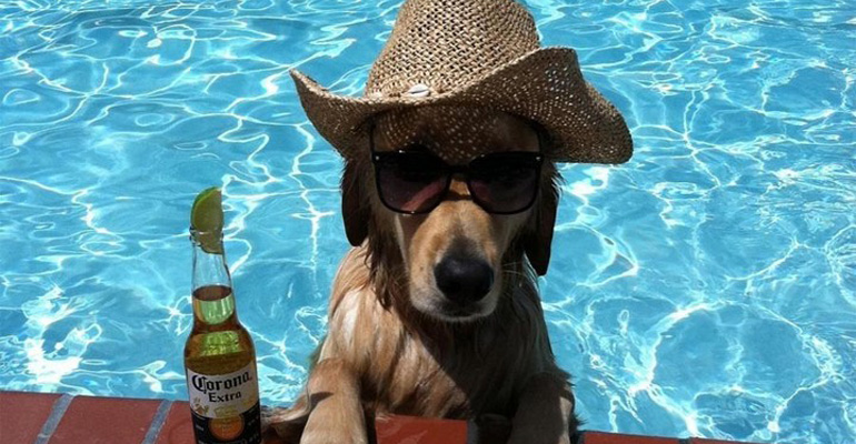 39 Animals Who Love Hanging Around the Pool Like the Rest of Us