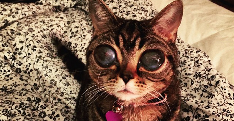 Matilda the Blind Cat Has Alien-Like Eyes but Loves to Snuggle.