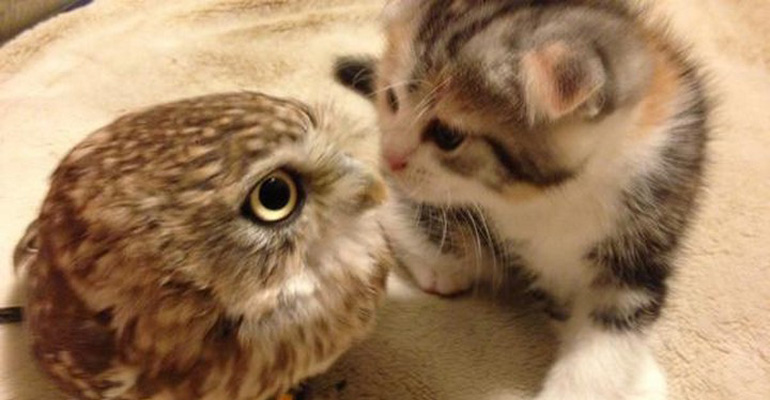 Owlet and Kitten Are the Best of Friends and Incredibly Cute.
