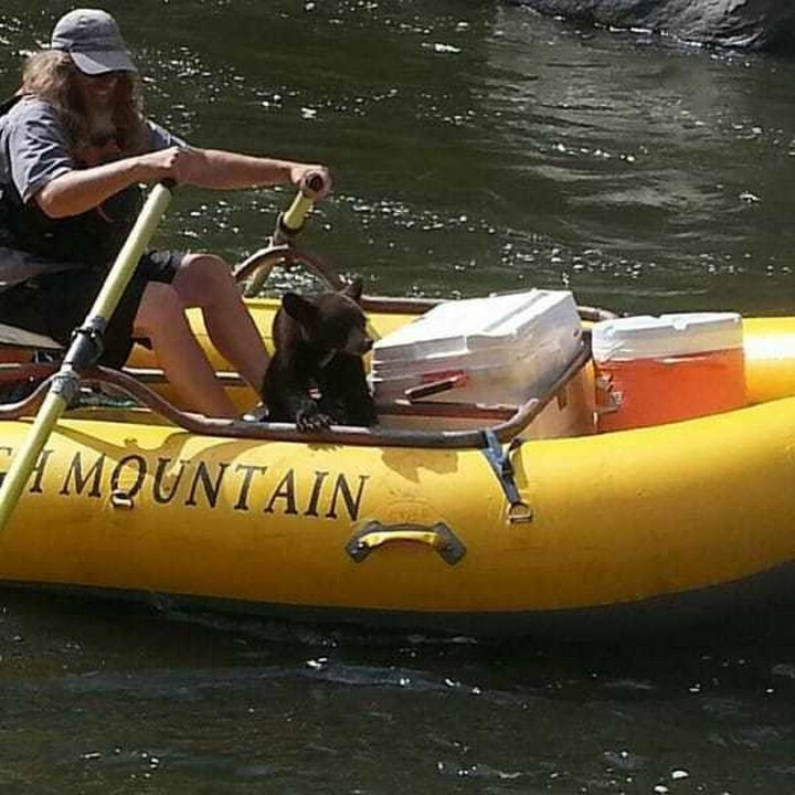 Danny Allen, a rafting guide, spotted a bear cub for several days while rafting and noticed that it was always alone.