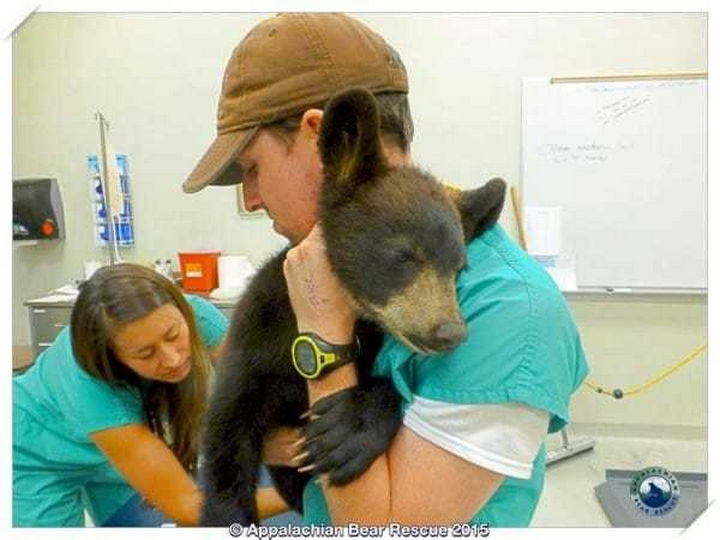 To ensure she was healthy, she was brought to the Appalachian Bear Rescue in for rehabilitation in Townsend, Tennessee.