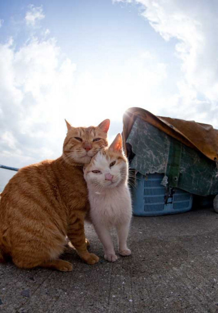 The island in Fukuoka, Japan has been called Cat Heaven Island because there are so many cats, and they are happy.