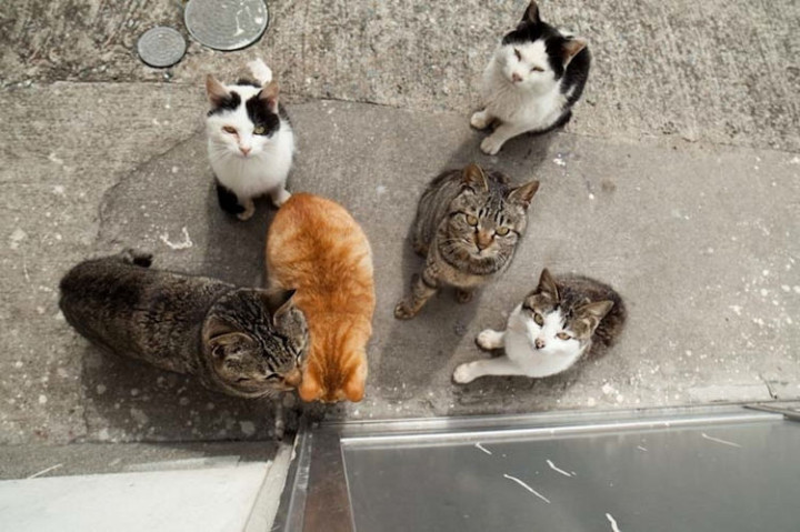 Cats love to eat and will continue to visit homes that feed them.