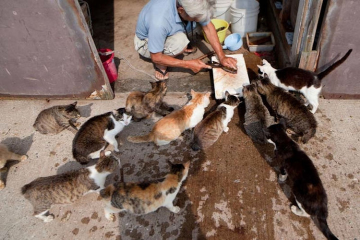 The locals love feeding the cats and treat them like pets of their own.