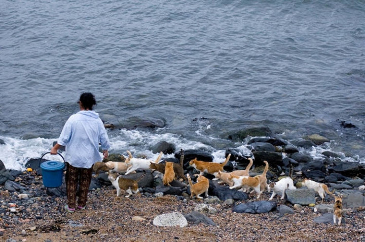 Local inhabitants of the island share their daily catches with cats on the island.