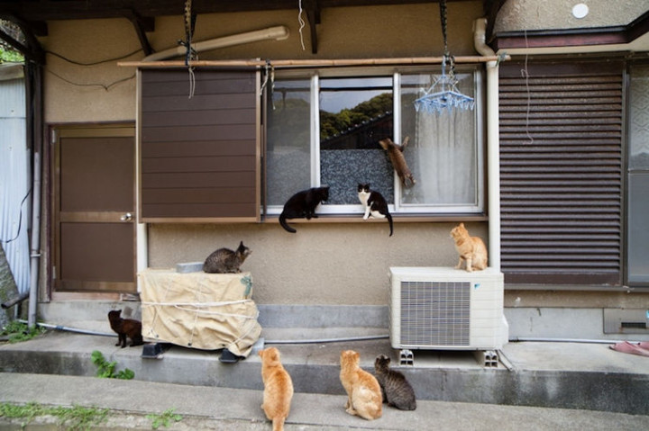 With so many cats at your door, it can be a handful at times.