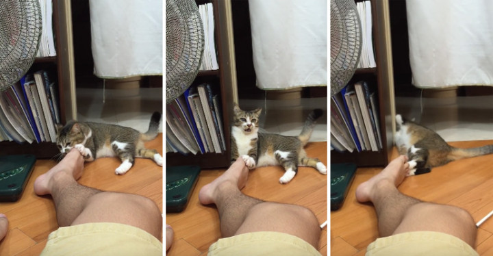 Cat Makes Mistake of Smelling Owner's Feet and Regrets It.