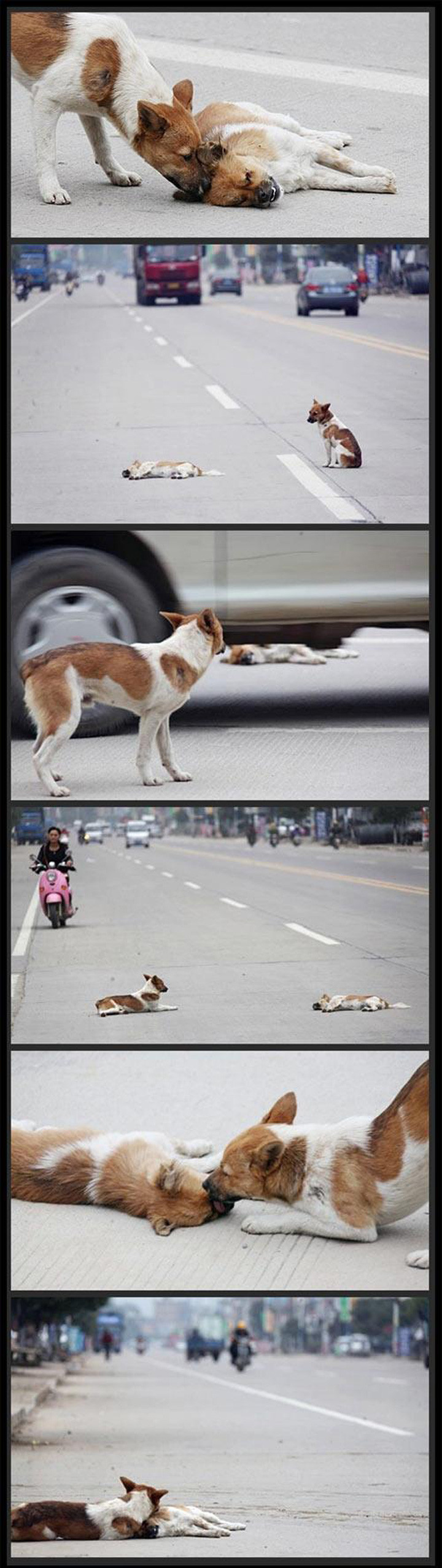 Dogs Have Emotions and This Tragic Photo Just Broke My Heart.