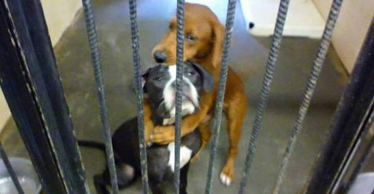 For two puppies at a shelter in Atlanta, Georgia, the clock was ticking and when Angels Among Us Pet Rescue heard about it, they and the shelter quickly made a plea for help on Facebook.