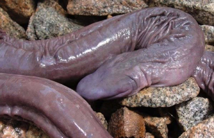 22 of the Weirdest Animals on Earth - Blind Snake