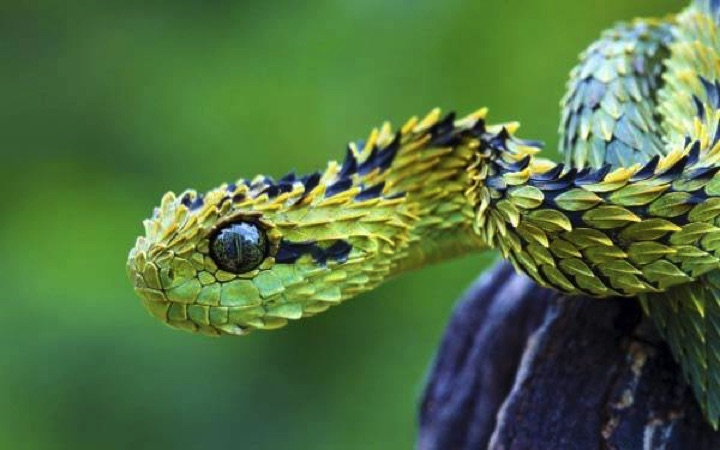 22 of the Weirdest Animals on Earth - The Bush Viper