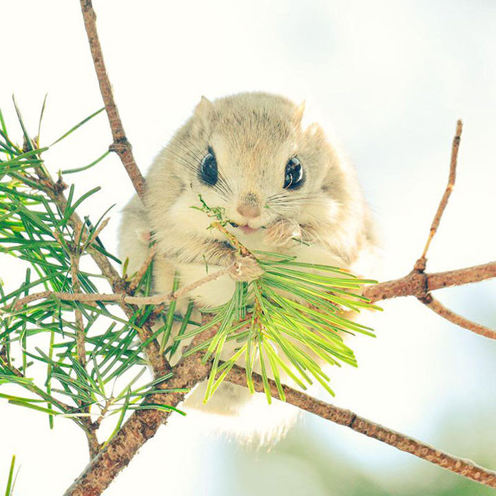 22 of the Weirdest Animals on Earth - Ezo Momonga