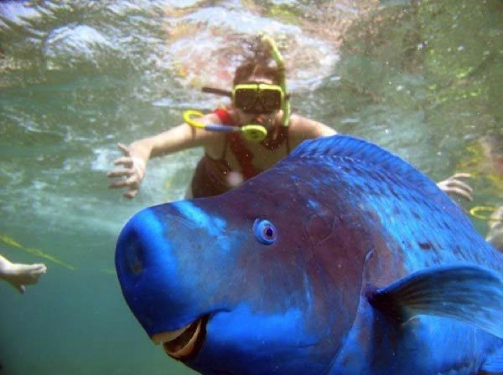 22 of the Weirdest Animals on Earth - The Blue Parrotfish