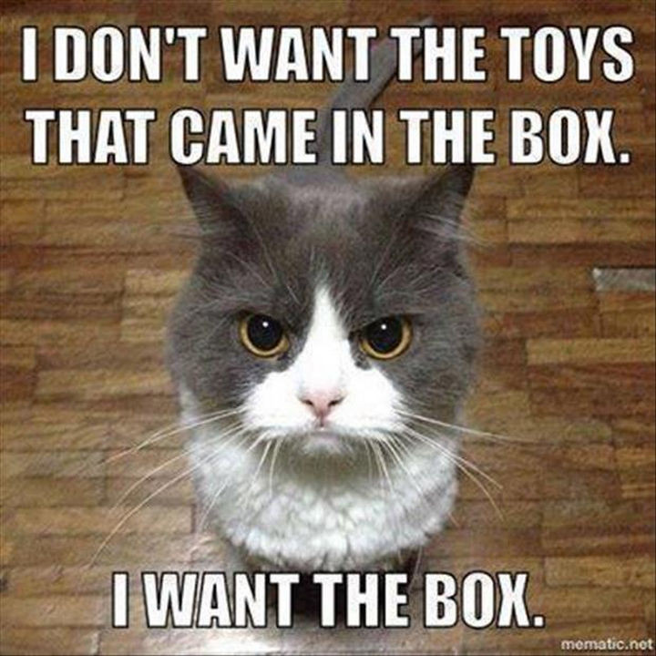 21 Cat Logic Photos - If it fits, I sits.