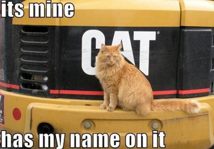 21 Cat Logic Photos - She has a point.