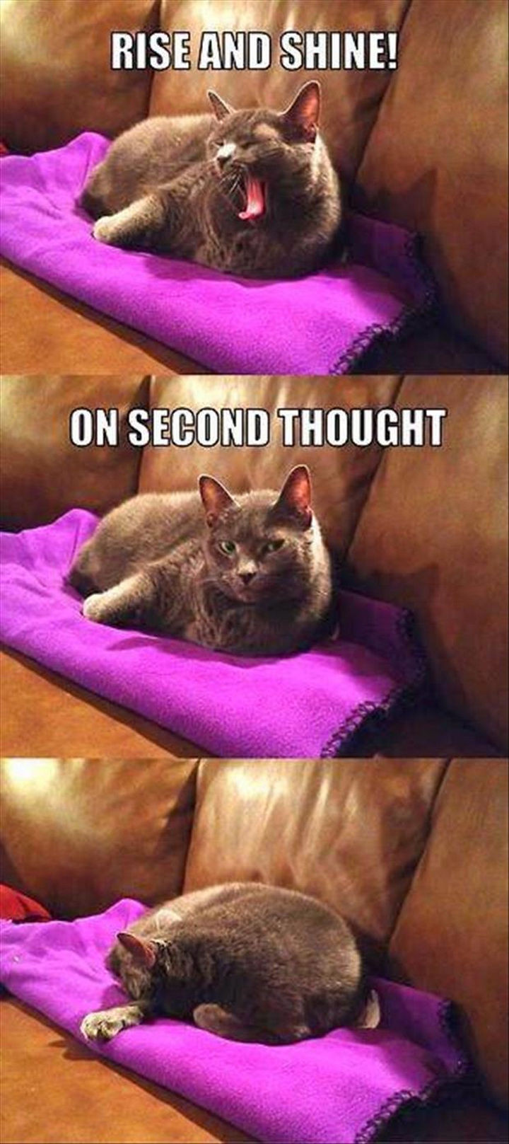 21 Cat Logic Photos - Like I couldn't have predicted that one.