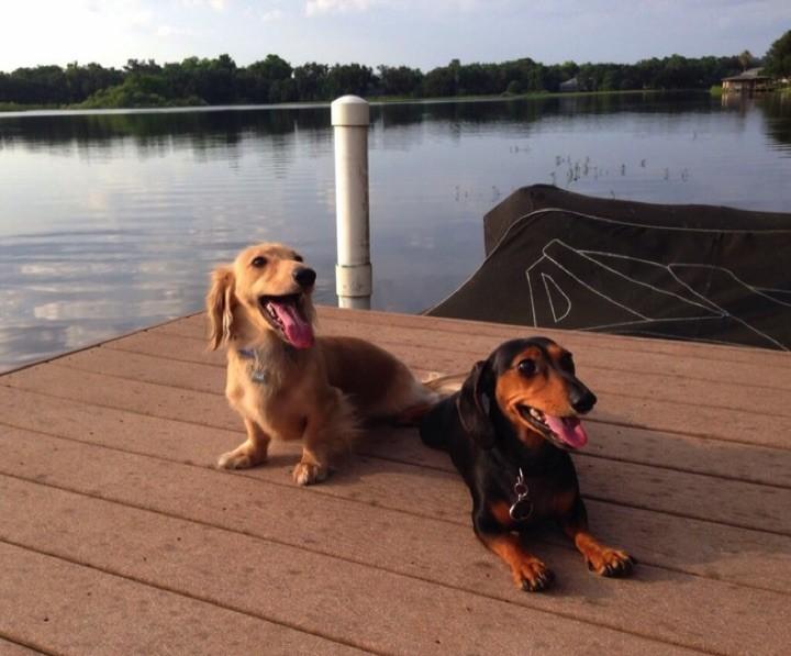 "28 Cute Dachshunds - ""Ahh, the dog days of summer..."""