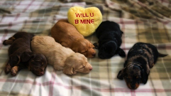 28 Cute Dachshunds - Yes, please be mine!
