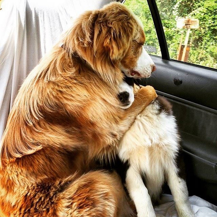 """28 Animals Going to the Vet - """"Whatever happens, I'm always here for you buddy!"""""""