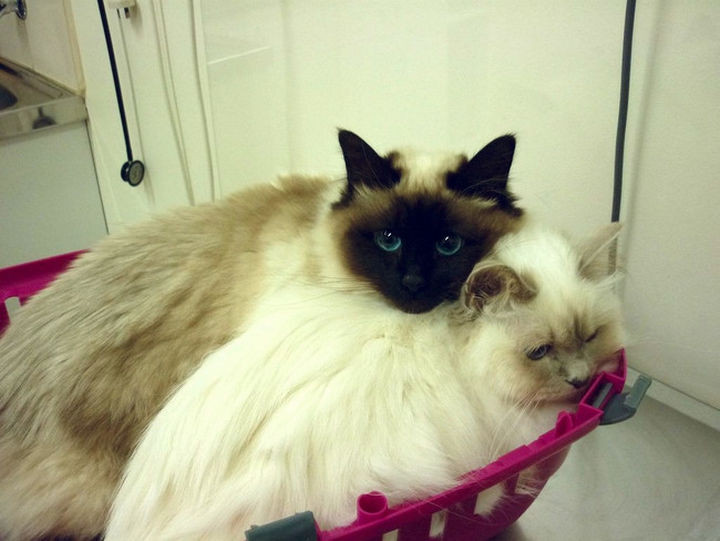 """28 Animals Going to the Vet - """"Stay with me sister, I'll protect you!"""""""